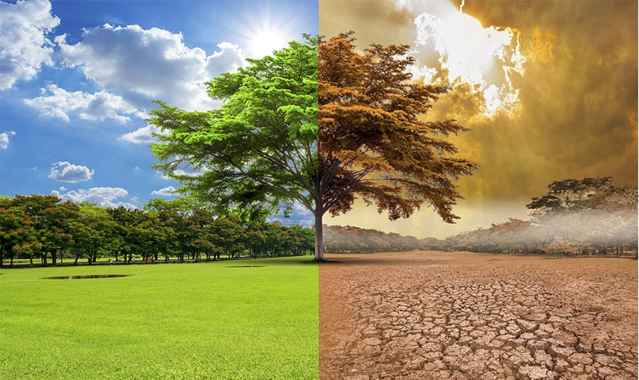 Climate Emergency Image one tree before disaster one after